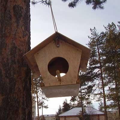 Социальный проект Покормите птиц зимой