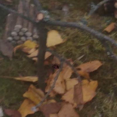 Осень в Звенигороде